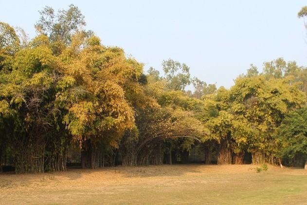 For all trekking lovers chance to explore the beauty of Nepli-Kansal Forest: online registration start