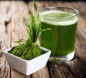 Barley Grass That Can Do Miraculous Work To Make You Healthy