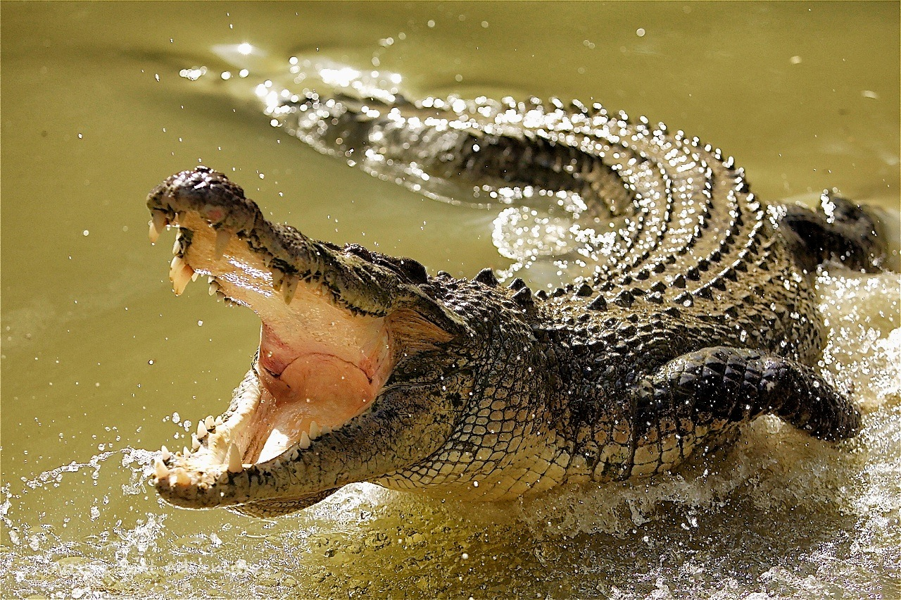 Interesting Facts About Crocodiles  Know Why Crying Crocodile Tears Is So  Famous 2f16b02e45e1b
