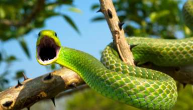 Interesting Facts About Snakes That Will Surprise You