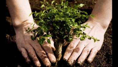 Chandigarh Going To Get More Greener With Trees And Shrubs