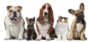 List Of Benefits Of Having Pets In Our Homes