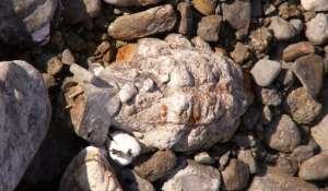 Children Found Hand Grenade Near Ghaggar