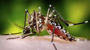 Amazing And Interesting Facts About Mosquitoes