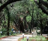 City Forest chandigarh nagar van